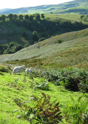 New upland commons project in the Shropshire Hills