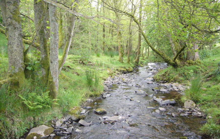 upper riparian woodland in the Clun catchment