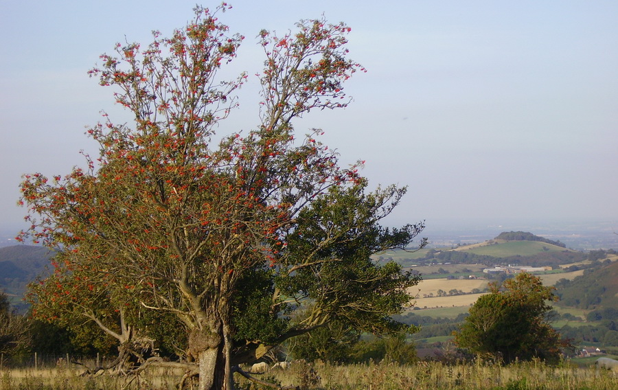 The Hollies Nature Reserve above Snailbeach